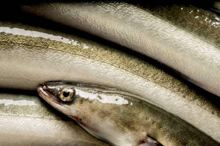 RECETAS CON ANGUILA. Hoy, anguilas guisadas con pimentón