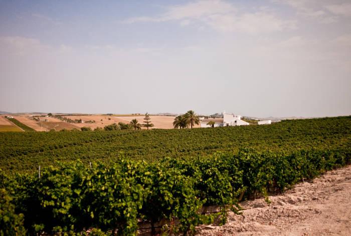 FINCA MONCLOA. Bodegas gaditanas apasionadas por el mejor vino