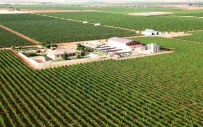 SOCUÉLLAMOS. Una experiencia única para disfrutar de la nueva Ruta del Vino de La Mancha