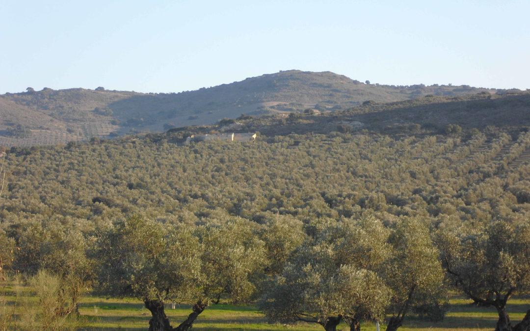 FINCA LA TORRE. Un AOVE excelente, ecológico y sostenible